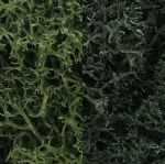 WL168 Woodland Scenics: Lichen - Dark Green Mix (3 qt./165 cu. in. )